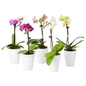 вазони кімнатні квтікові