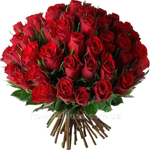 51 троянда купити